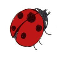 marieta-emma-pumarola-ladybug